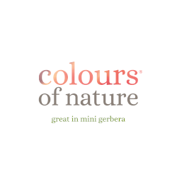 Colours of Nature - great in mini gerbera